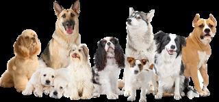 Edad de tu perro 320*150